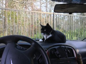 dashboard cat